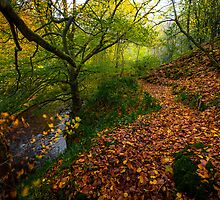 Roslin glen into the autumnal mist by Graeme  Ross