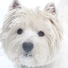 Born to  love snow by MarianBendeth