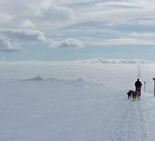 Dog sledding in Swedish Lapland by Eric Tchijakoff
