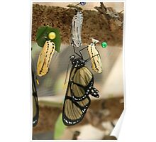 Yellow and Black Butterfly Emerging Poster