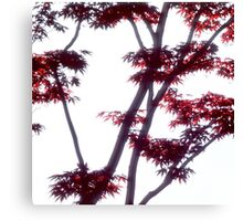 Japanese maple with red leaves Canvas Print