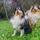 Dogs in the Fog by BellatrixBlack