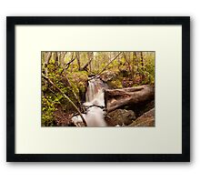 Life of the forest Framed Print