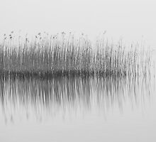 Reeds by Christophe Besson