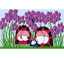 The Ladybug Family Photographic Print