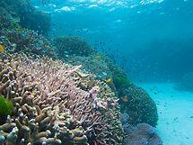 Coral Garden by Mark Rosenstein