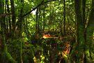Puzzle Wood  by Nigel Bangert