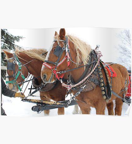 Horse Drawn Sleigh Ride Poster