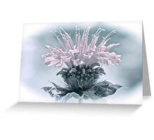 Muted Colors Bee Balm Greeting Card