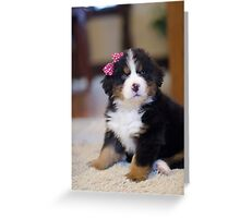 Birdie the Bernese Puppy Greeting Card