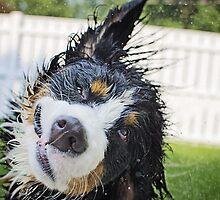 Dog bath! by TheJill
