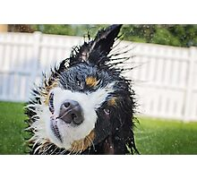 Dog bath! Photographic Print