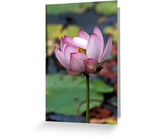 Lotus Ready To open Greeting Card