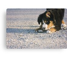 Get that rock, Berner! Canvas Print