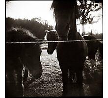 { pony pals } Photographic Print