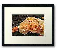 Rose Beach Baby Framed Print