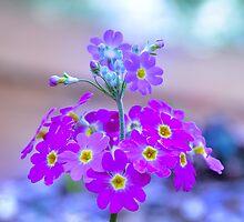 Floral Art by Olivelle