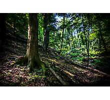 Untouched forest Photographic Print