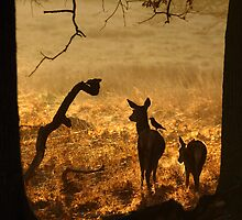 Morning Glow by Martin Griffett