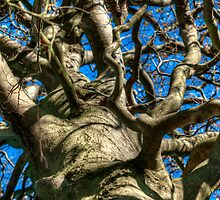 The Pattern of Branches  by Neil Cameron