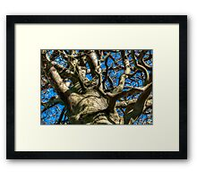 The Pattern of Branches  Framed Print