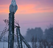Sunset Snowy by Owl-Images