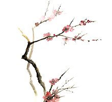 Cherry Blossom Sakura Flowers Pink Red White Brown Black Tree Flower Watercolor Painting by Johana Szmerdt
