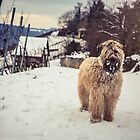 Wheatens+Snow=Happiness  by Boston Thek Imagery