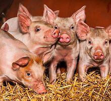 Piglets by wildscape
