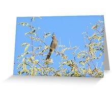 Female Phainopepla Eyeing the Morning from Her Tree Greeting Card