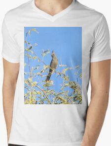 Female Phainopepla Eyeing the Morning from Her Tree Mens V-Neck T-Shirt