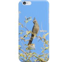 Female Phainopepla Eyeing the Morning from Her Tree iPhone Case/Skin
