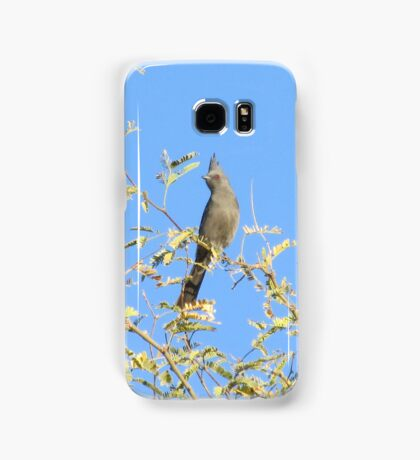 Female Phainopepla Eyeing the Morning from Her Tree Samsung Galaxy Case/Skin