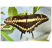 Brown and Yellow Butterfly on a Plant Poster