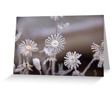 Frosted flowers Greeting Card