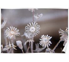 Frosted flowers Poster