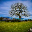 Tree - Hadrian's Wall by mcstory