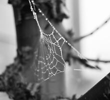 Spider Web by thealmightylion