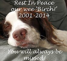 Our tribute to our pet 'Birch' who died today by sarnia2