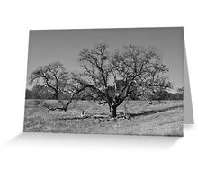 Sprawling oak tree- b&w Greeting Card