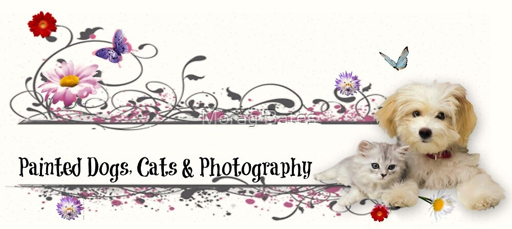 Painted Dogs, Cats & Photography Banner by Morag Bates