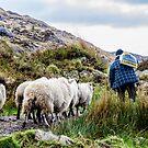 Lamb Pride by mcstory