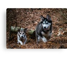 running dogs Canvas Print