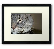 half a cat Framed Print