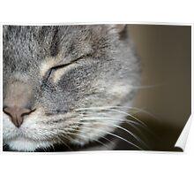 half a cat Poster
