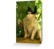 Where Have You Been? Greeting Card