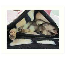 slumbering cat Art Print