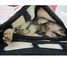 slumbering cat Photographic Print