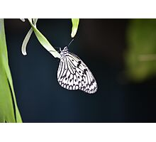 Butterfly Garden, Singapore Photographic Print