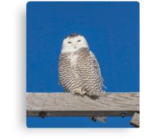 Sleepy Snowy Owl Canvas Print